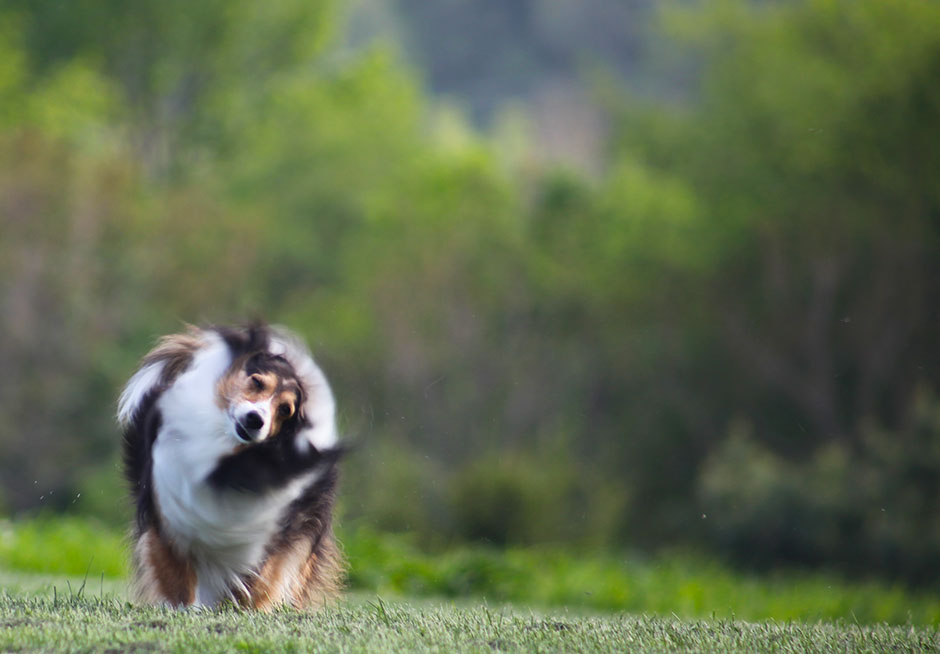 Dog photography tips: action