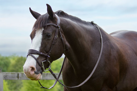 PS Of Sweden Get Set Revolution Bridle