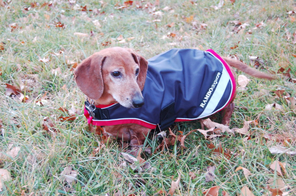 Equestrian holiday wishlist: Rambo Waterproof Dog Blanket