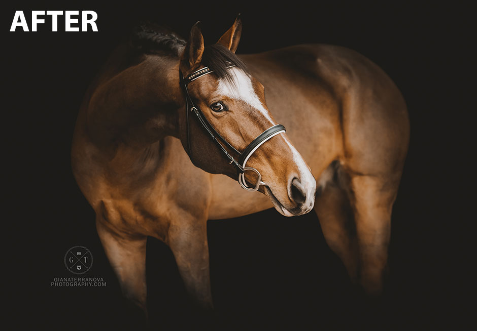 Black Background Equine Portraits: After