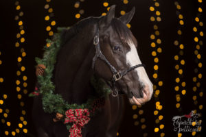 Christmas Horse Photoshoot With The Bokeh Effect