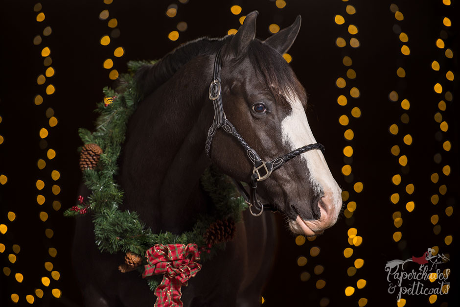 Christmas Horse Pictures.Nail Your Next Christmas Horse Photoshoot With The Bokeh
